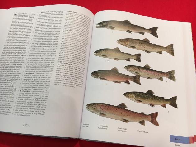 Encyklopédia Veľká kniha živočíchov , recenzia